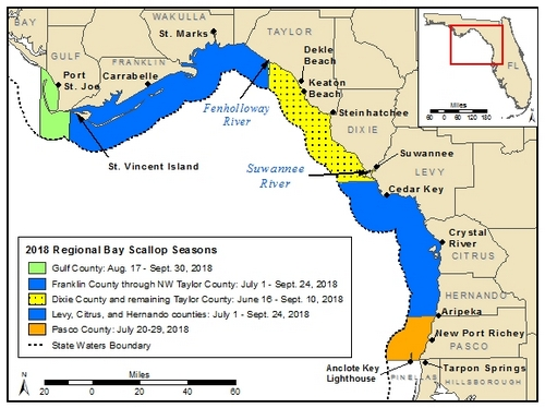 Bay scallop season opens July 1 in Franklin-NW Taylor and Levy-Hernando counties