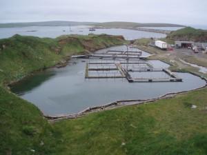Прудовое разведение рыбы