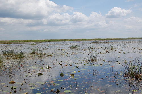 FWC conducts aquatic plant control on Lake Okeechobee