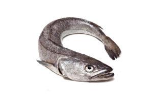 Hake (hake) fish (Merluccius)