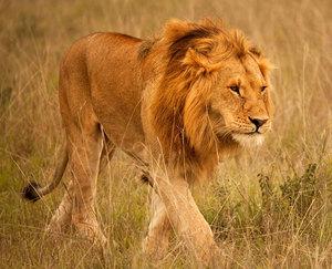 Животные, которые живут в Африки