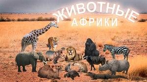 Экзотические животные в Африки