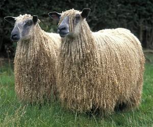 Шерсть ламы