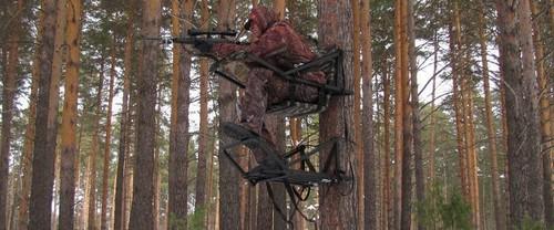 Bear hunting on oats