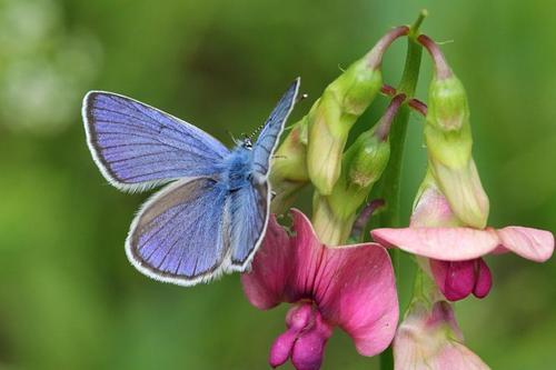 Butterfly on blue flower ranks