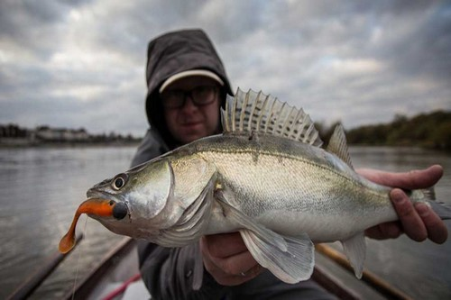 D. A. M VJ Longhorn is the perfect bait for Zander and perch