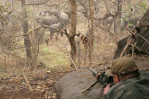 Охота на слонов