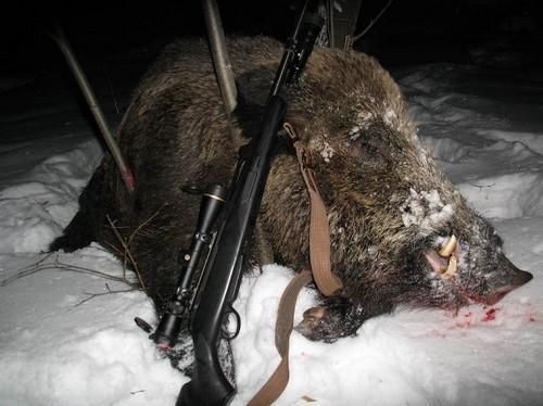 Охота на кабана ночью