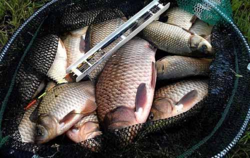 Fishing in may on carp