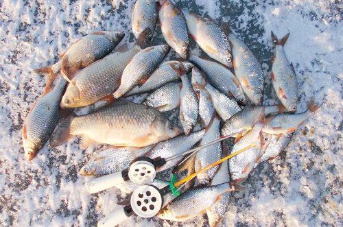 Зимняя рыбалка на Цимле