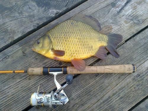 Fishing Piker
