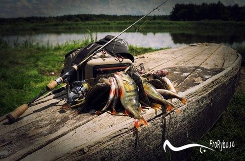 Спиннинг для ловли окуня на микроджиг