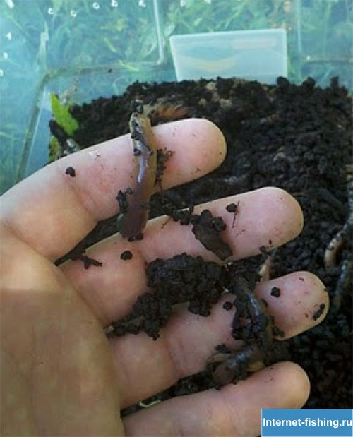 How to grow worms for fishing