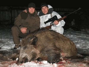 How to hunt for wild boar