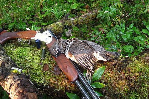 Hunting for grouse in the fall