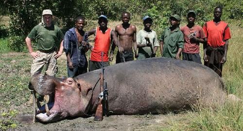 Охота на бегемотов