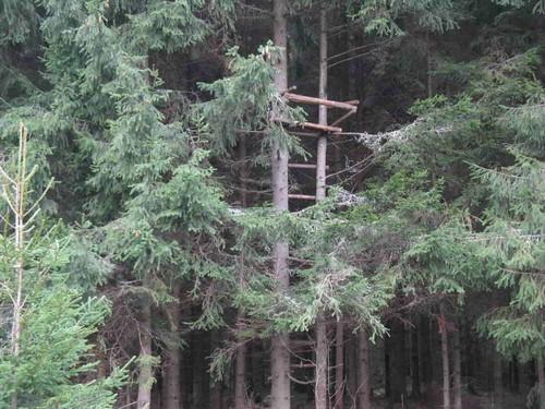 засидка на кабана на дереве