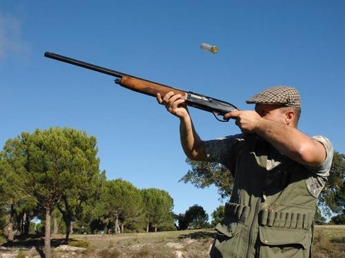 Hunting wild pigeon