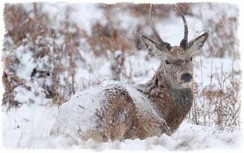 Methods deer hunting