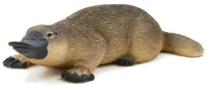 Platypus unique animal or the paradox of nature