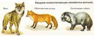 Хищники семейства волчьих