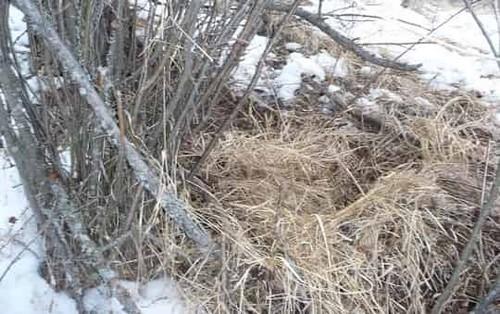 зимняя лежка