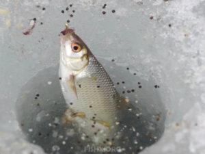 Нормы вылова рыбы