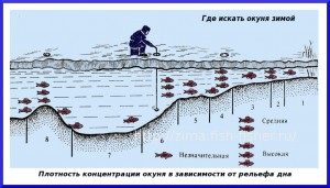 Search for fish in winter, on reservoirs and large reservoirs