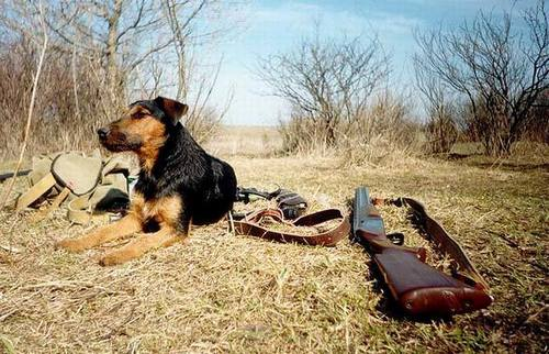 Spring hunting 2018: In Transbaikalia, the terms of the season