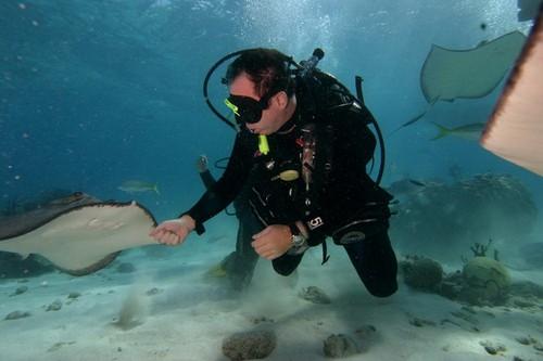 Лучшие места для дайвинга - Стингрей-Сити на Кайманских островах