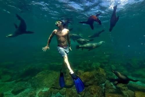 Дайвинг с морскими львами вблизи острова Лос-Ислотес, Мексика