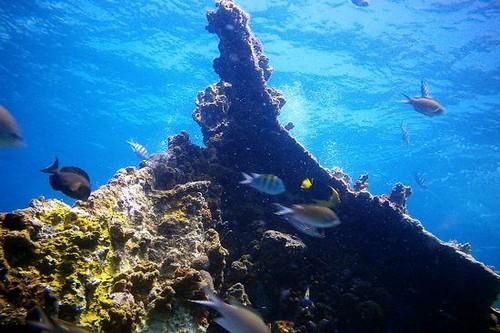 Рона - популярный рэк-сайт на Британских Виргинских островах