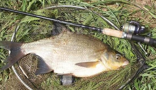The bream fishing on the feeder