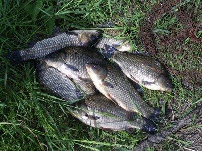The carp fishing for the beginner