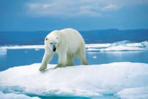 На планете много животных еще не редких, но имеющих возможность стать таковыми