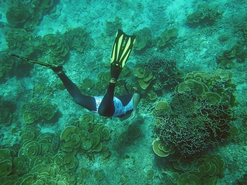 The underwater world of the Andaman sea at Similan Islands