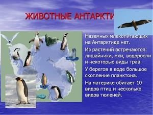 Уникальные животные Антарктиды
