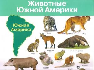 Список животных, которые живут в Северной Америки