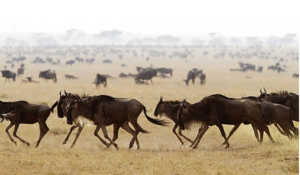 Степи встречаются на всех континентах, поэтому животный мир их столь разнообразен