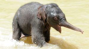 Сколько весит слоненок