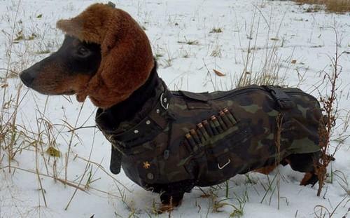 Что одеть на охоту