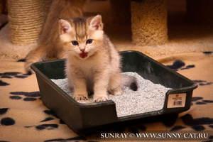 Котенок в лотке