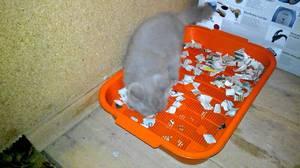 Лоток пластиковый