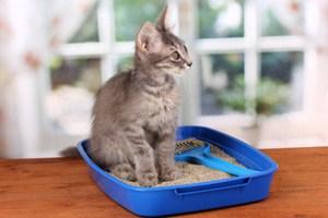 Приучивание котенка к лотку