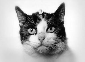 Кошка Фелисет в космосе