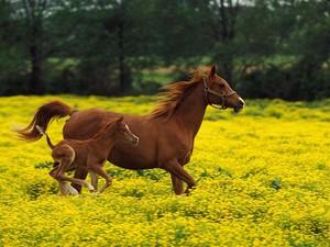 Лошади на природе