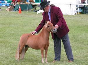 Маленький пони и хозяин