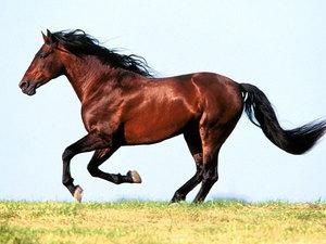 Любопытные факты о лошадях