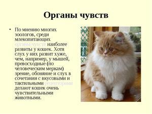 Анатомия кошек - краткое описание