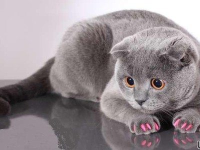 Антицарапки нужны вашей кошке